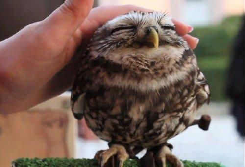 owl.cafune.bahia.funkysudaka